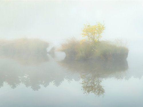 Eilandje met boom in de mist. van