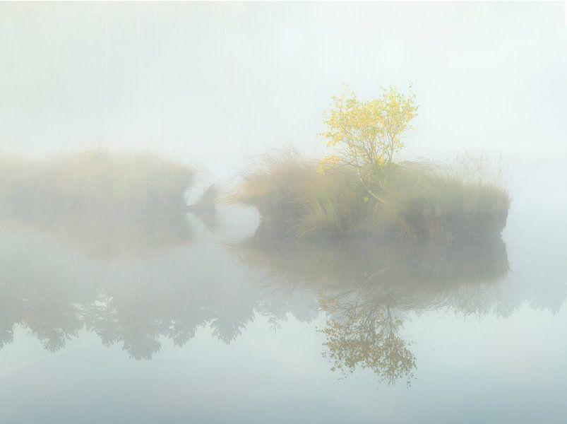 Eilandje met boom in de mist. van Jos Pannekoek