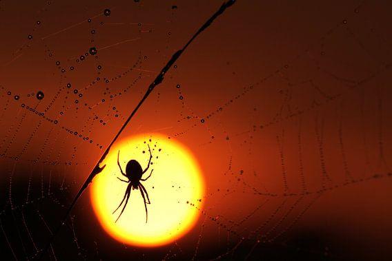 Spin in het licht van de zonsondergang van Paul Wendels