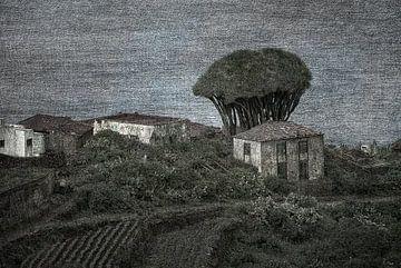 El Tablado von Tejo Coen