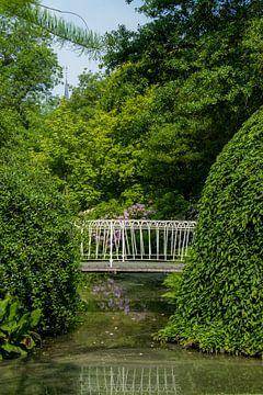 Rotterdam-Botanische Tuinen Trompenburg 03 von Hans Blommestijn