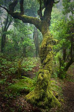 Regenwoud van Andreas Kilian