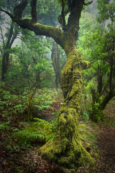 Regenwald von Andreas Kilian