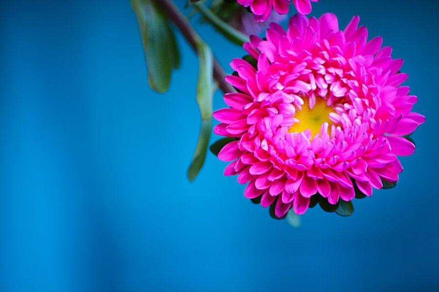 Roze bloem van Lizet Wesselman