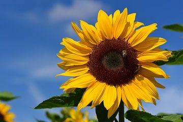Een gele zonnebloem tegen een blauwe lucht van Ulrike Leone
