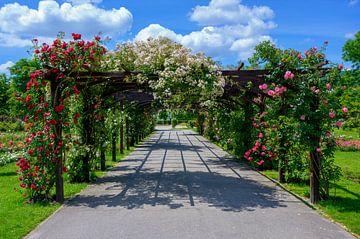pergola met rozen van Leopold Brix