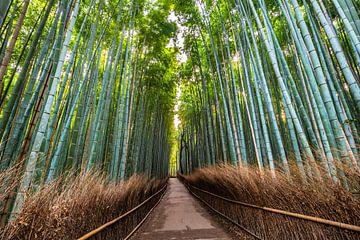 LP 71316973 Loop pad in Arashiyama Bamboo Grove, Kyoto, Japan, Azie van BeeldigBeeld Food & Lifestyle