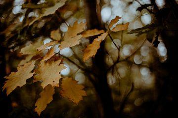 Herbstblätter von Julie Roothooft