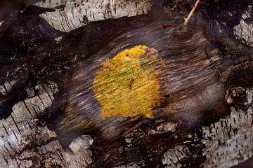 Nature-Art 013 van Henk Elshout