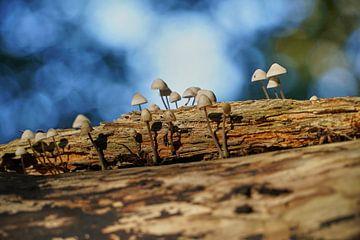 Paddenstoeletjes op een boomstam van Angélique Vanhauwaert