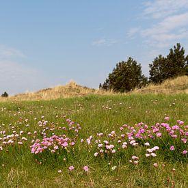 Engels gras kleurt het duinlandschap van Vlieland in het voorjaar roze van Marijke van Eijkeren