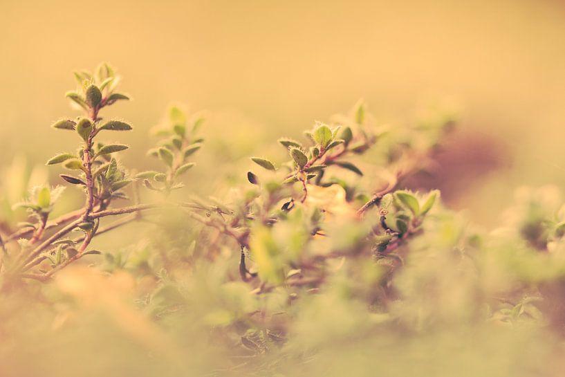 Zo klein, zo fijn in de ochtendzon.  van Robert Wiggers