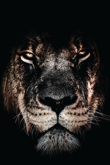 Dunkler Löwe | Dunkler Löwe