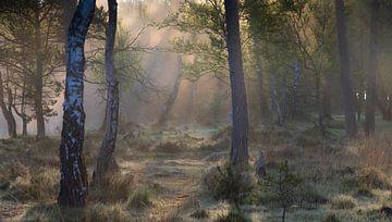 Morgen Wald von YvePhotography