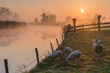 Moulin de Vlinder par un matin brumeux dans la Betuwe