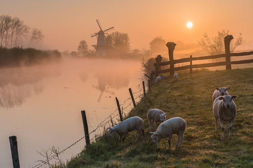 Moulin de Vlinder par un matin brumeux dans la Betuwe sur Jeroen de Jongh
