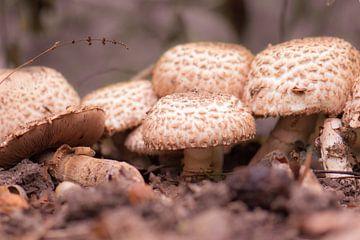 paddenstoelen dorp van Tania Perneel