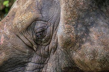 Auges eines Nashorns von Fred Leeflang