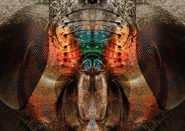 Porträt des Insekts von Andreas Schulte