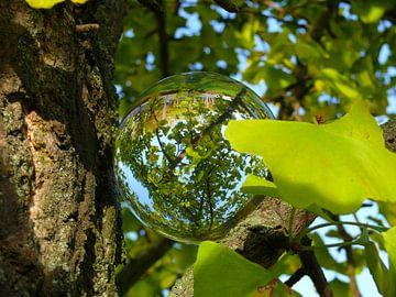 Glazen bol in ginkgoboom, glazen bollenfotografie van RaSch_Design