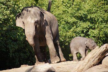 Aziatische olifant met jong von Ronald en Bart van Berkel
