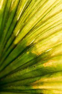 Palmblad Focus