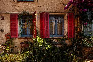 Windows of Flowers
