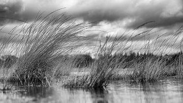 Het landschap staat onder water, alleen de lange grassprieten komen boven het oppervlak uit. van Studio de Waay
