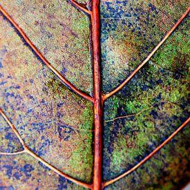 leaf in autumncoat van Els Fonteine