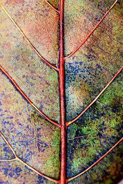 leaf in autumncoat sur Els Fonteine
