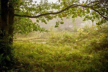 Bos en mist sur
