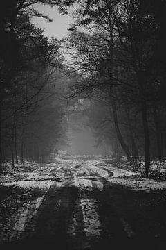 Mist aan het einde van de bosweg van