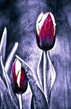 Red tulip art van Sran Vld Fotografie