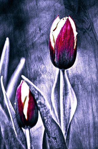 Red tulip art