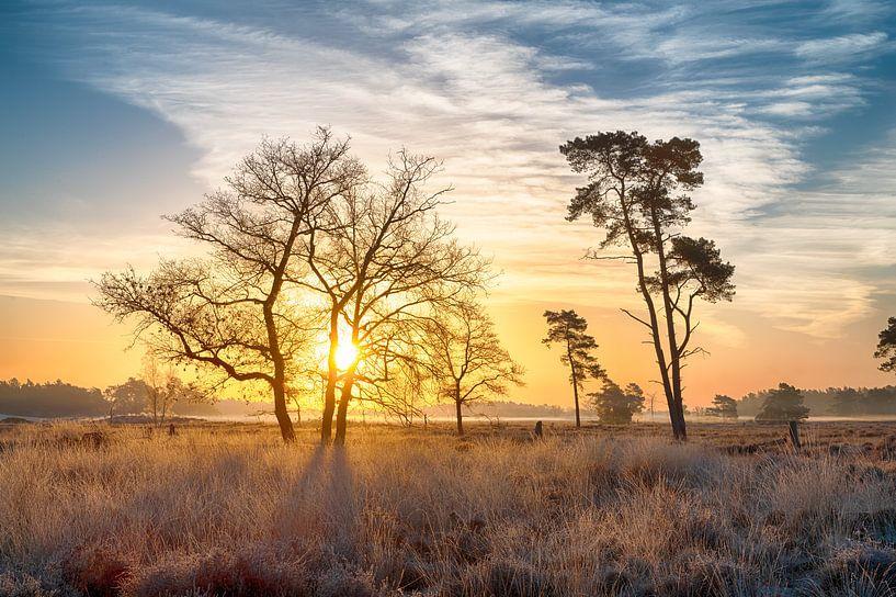 Landschap in de morgen van Mark Bolijn