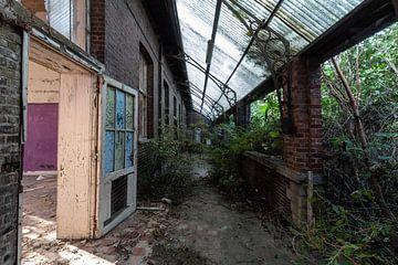 Haus gegen Natur von Matthis Rumhipstern