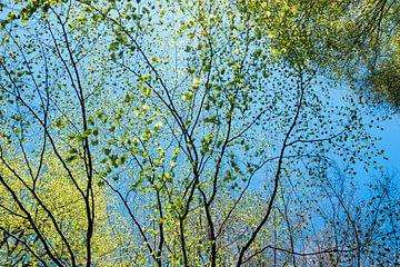 lente, lichtgroene blaadjes tegen een stralend blauwe lucht van