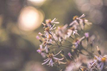 Blumen Teil 190 von Tania Perneel
