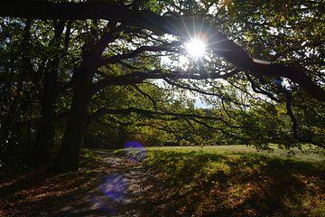 Bomen en gefilterd zonlicht van My Footprints