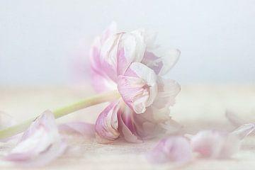 verblasste Blüte von natascha verbij