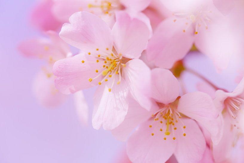 Sweet Spring van LHJB Photography