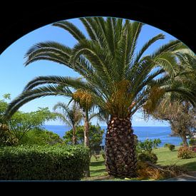 Palmboom op Madeira van Ina Hölzel