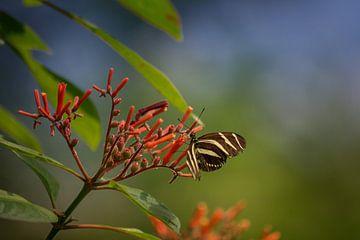 Vlinder van Linda Lu