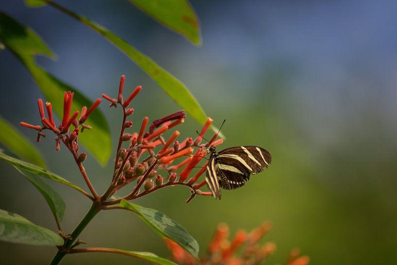 Butterfly von Linda Lu