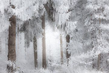 La forêt près de Dwingeloo dans une épaisse couche de neige dans le brouillard - Drenthe sur Bas Meelker