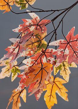 Takken met bladeren in pastel kleuren van de herfst van Tony Vingerhoets