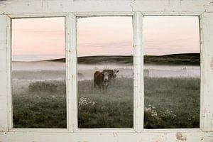 Boerderijraam met koeienweide van
