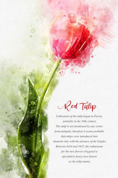 Rote Tulpe von Theodor Decker