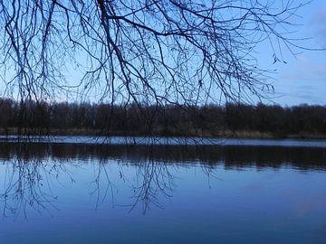 Water weerspiegeling in de bossen van Almere van Ingrid Van Maurik