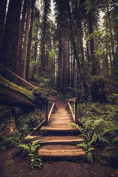 Eingang zum Wald der Riesen von Joris Pannemans - Loris Photography